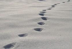 Fußstapfen - Geh deinen Weg den Du gehen sollst