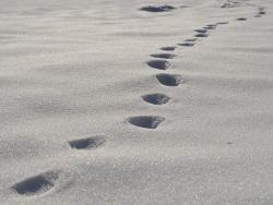 Gott führt uns Schritt für Schritt. Er ist am Wirken auch wenn wir es nicht merken. Wenn wir die Schritte nicht gehen kommen wir nicht ans Ziel, wenn andere nach dem ersten Schritt den Weg kaputt reden gehen wir eventuell nicht.