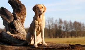 Hund in wachender Stellung bei ruhiger Landschaft