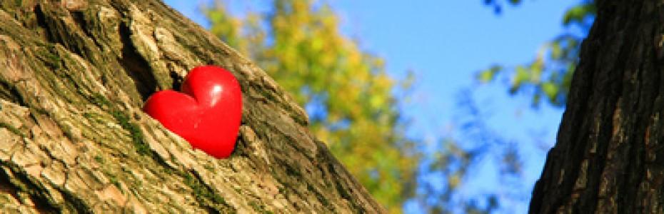 Ich aber sage: Liebt eure Feinde! Betet für die, die euch verfolgen! (Matthäus 5, 44)