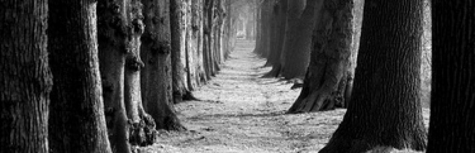 Der Herr spricht zu mir: 'Ich will dir den Weg zeigen, den du gehen sollst.' ( Psalm 32, 8 )
