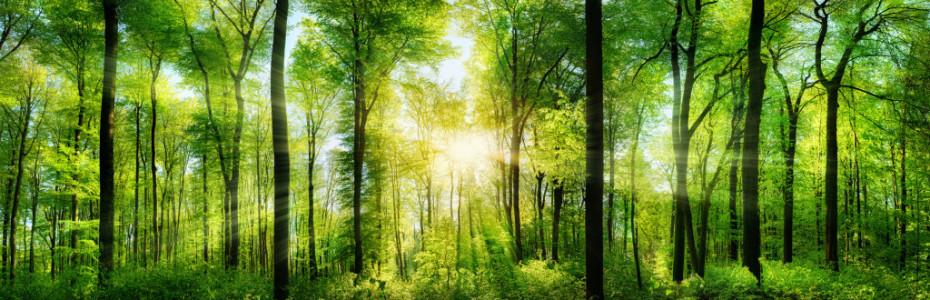 Und auch jeder Christ ist wie ein Baum oder besser gesagt, er sollte es sein. Fragt ihr euch jetzt, wie man das denn verstehen soll? Nur wenn wir Gott in unser Leben lassen, dann können wir standhaft sein und gegen jeden Wind bestehen. Unsere Nahrung, das ist Gottes Wort. Wir hören es im Gottesdienst, bei einer Andacht oder wenn wir in der Bibel lesen. Es spendet uns Zuversicht und Trost. Und wir können sogar Früchte geben, nämlich Geborgenheit, Liebe und Barmherzigkeit.