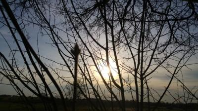 Sonnenuntergang durch den Baum betrachtet